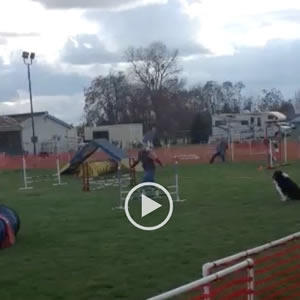 Dog agility a few weeks after partial knee replacement